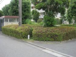 埼玉県川越市庭木剪定 サツキの剪定 作業後