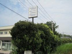 埼玉県川島町庭木剪定工事 マテバシイ