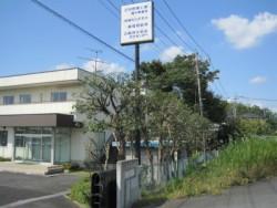 埼玉県川島町庭木剪定工事 マテバシイの剪定 作業後
