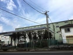 埼玉県東松山市庭木剪定工事 カイヅカの剪定 作業後