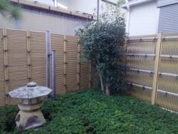埼玉県富士見市の植木屋。株式会社ドリームガーデン キンモクセイの剪定 透かし剪定