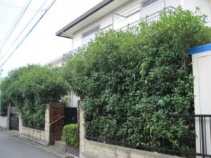 川越市生垣剪定、植木の伐採、植木屋、造園業、お庭のお手入れ