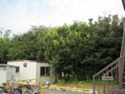 埼玉県川島町伐採工事 カシの木伐採 雑木伐採 高木伐採
