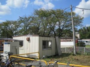 川島町伐採、庭木剪定、植木屋、造園業、お庭のお手入れ