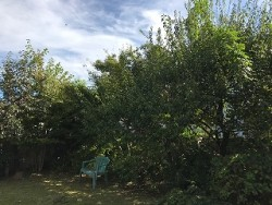 埼玉県所沢市庭木剪定工事 お庭のお手入れ
