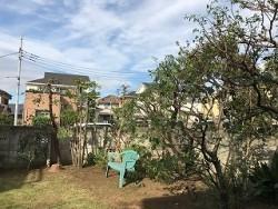 埼玉県所沢市庭木剪定工事 お庭のお手入れ 作業後