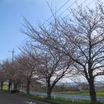 富士見での造園業者 撮影風景