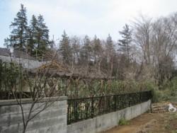 埼玉県東松山市庭木剪定工事 レッドロビンの生垣、強剪定 作業後