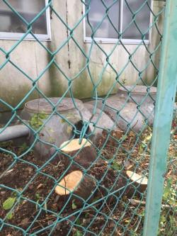 埼玉県東松山市伐採工事 雑木の伐採 高木の伐採 切り株仕上げ