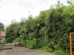 川島町伐採工事 クスノキ伐採 雑木伐採 高木伐採